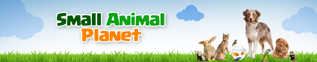 Small Animal Planet