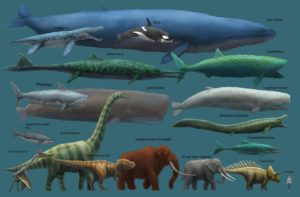 Blue Whales Are Big!