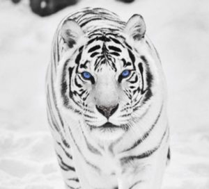 The Most Beautiful Animals in the World