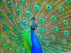 The Most Beautiful Animals of the World