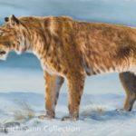 The American Scimitar Cat