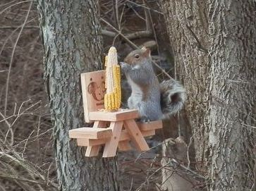 The Best Squirrel Feeder and Other Squirrel Questions