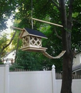 The Best Squirrel Feeder
