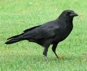 The Smartest Bird