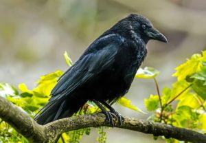 The World's Smartest Bird