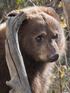 Most Popular Zoo Animals - Bear