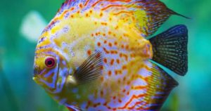 Are Fish Colorblind?
