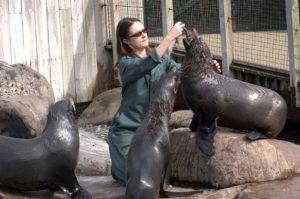Careers in Animal Behavior