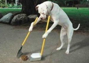 Dog Marker Training