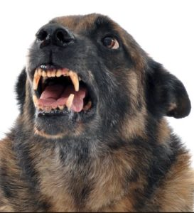 What to Do About Dog Fights