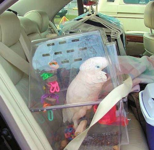 Car Bird Travel